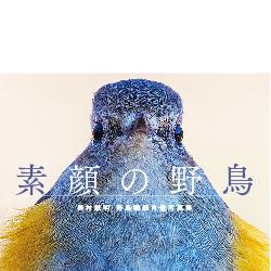 素顔の野鳥