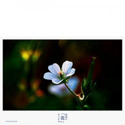 熊野の「花」